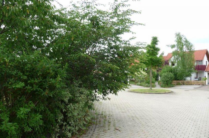 Wenn Bäume Schuld sind am Nachbarschafts-Krach